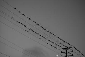 binarybirds.jpg